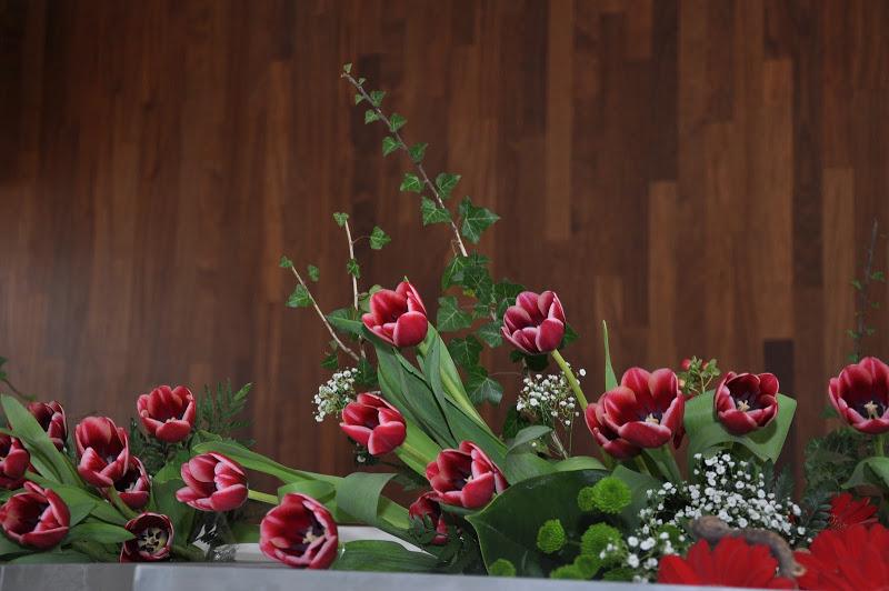 tulipan Maczka (5)