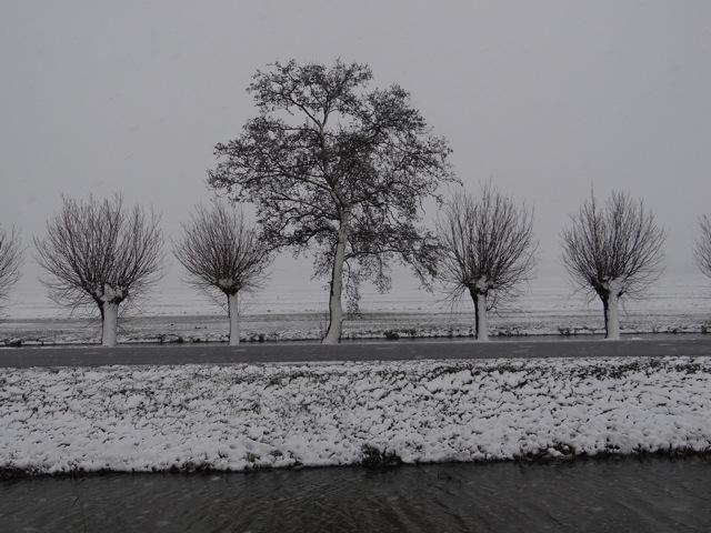 Eppo zima (9)